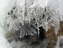220px-Feathery_Snow_Crystals_(2217830221)